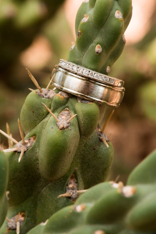 ring shot on a cactus